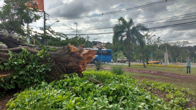 Árvore arrancada do chão mostra a força dos ventos na madrugada de 5 de junho: Campinas precisa aprimorar cada vez mais adaptação a mudanças climáticas (Foto José Pedro Martins)