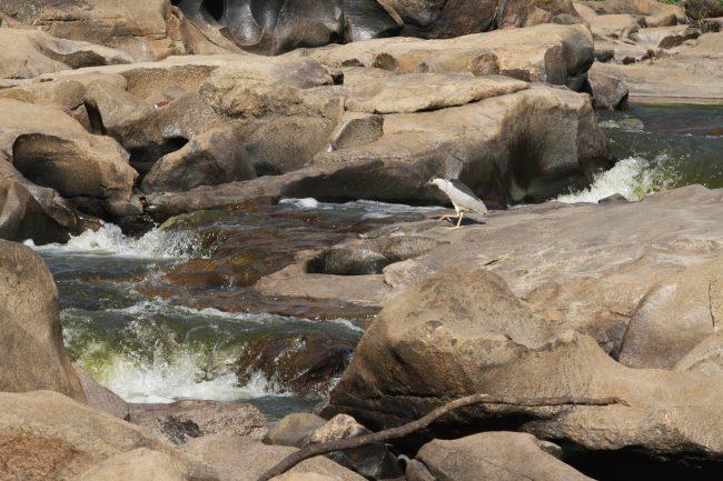 Rio Atibaia seco em janeiro de 2015, outro sinal de evento climático extremo (Foto Adriano Rosa)