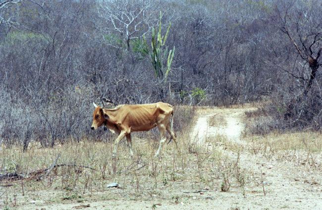 A seca que devasta o Nordeste há seis anos vai aparece nas discussões do Fórum? (Foto Adriano Rosa)