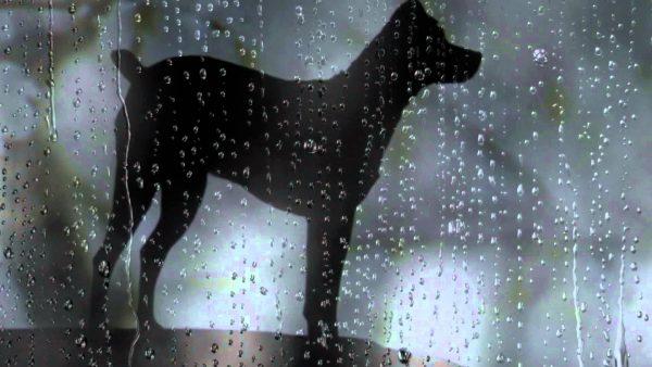 Blog Dani heart-of-a-dog3
