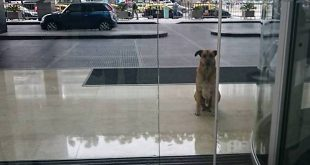 Crédito: Divulgação/Mascotas Puerto Madero Adopciones Responsables
