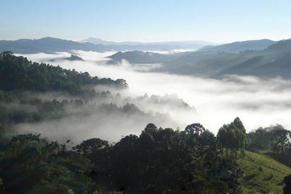 Cacalo_Monte Verde_monteverde02