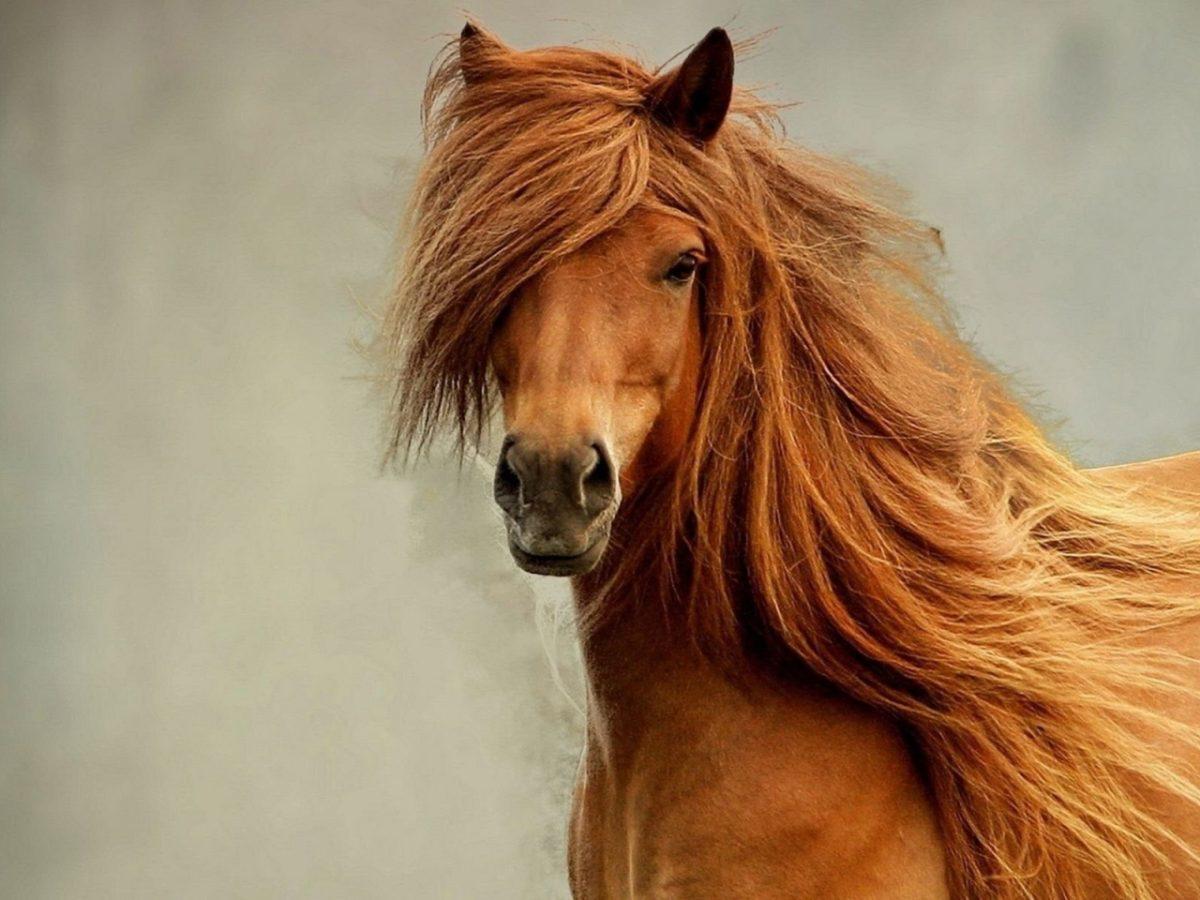 Cacalo_cavalo 10