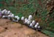 Cogumelos são objeto de importantes pesquisas (Foto Arquivo Pessoal/André Sarria)