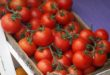 Os tomates vão recuperar o seu gosto? (Foto André Sarria)