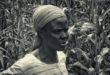 De que maneira plantas vivendo em harmonia estão melhorando a produção de alimentos na África
