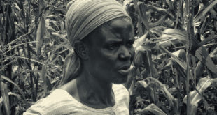 Uma experiência de produção de alimentos na África (Foto André Sarria)
