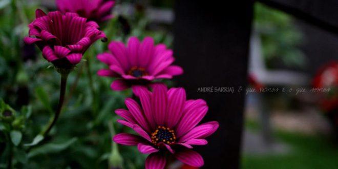 O silêncio dos jardins