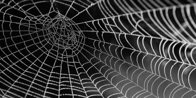 Mais uma incrível descoberta sobre as aranhas