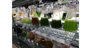 Algas estão na base da vida no planeta (Foto Andre Sarria)